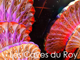 Culture Divine - Les Caves du Roy, Nightclub - Saint Tropez